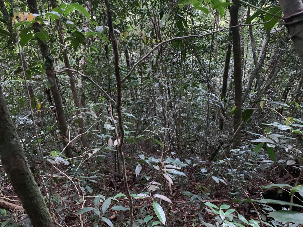 Foto do vara mato na subida para o cume.